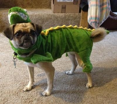 Zelda Dino